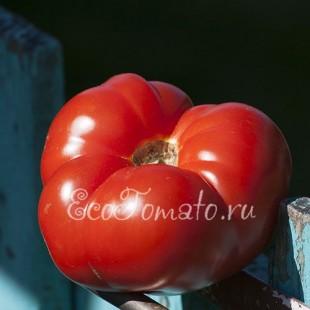 Сорт томата Алена