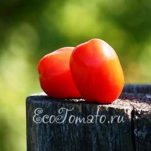 Сорт томата СХ-1