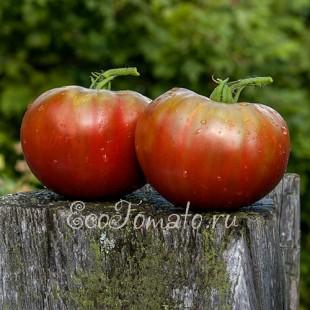 Сорт томата Copper River (Купер ривер, Медная Река), США