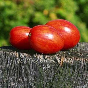Сорт томата Дон Жуан