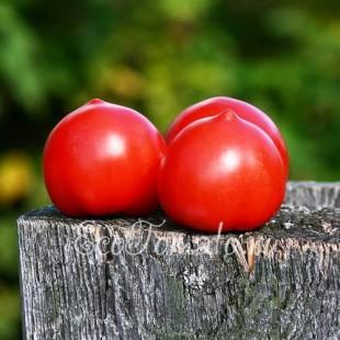 Сорт томата Енот