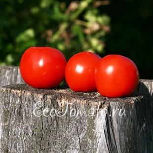 Сорт томата Эврика