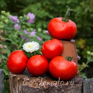 Сорт томата Frazier's Gem (Джем Фрейзера), США