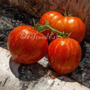 Сорт томата Gandolf (Гандольф), США