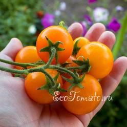 Горшечный оранжевый