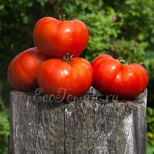 Сорт томата Грунтовый 4