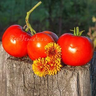 Сорт томата Краса Грядки
