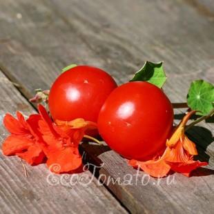 Сорт томата Кременчугские