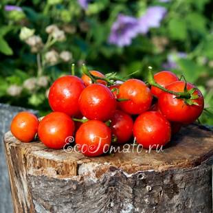 Сорт томата Кроха, Беларусь