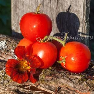 Сорт томата Ксюшенька