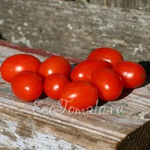 Сорт томата Лебяжий Пух