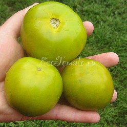 Lime Green Salad (Лайм Грин Салад), США