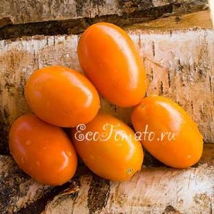 Сорт томата Лисичка