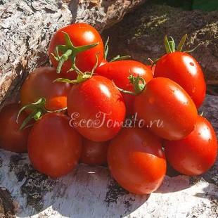 Сорт томата Лось
