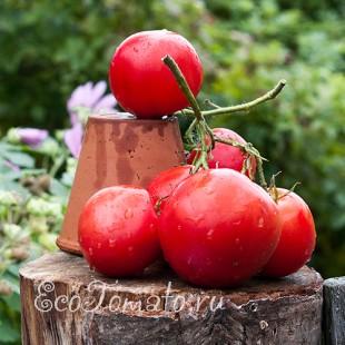 Сорт томата Малиновое виконте
