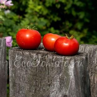 Сорт томата Майские