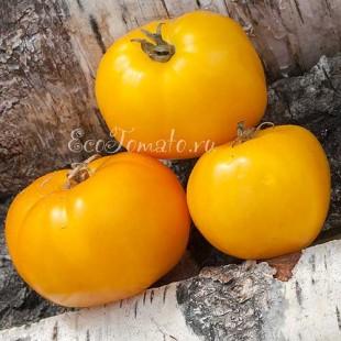 Сорт томата New Big Dwarf, orange (Новый большой гном, оранжевый)