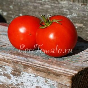 Сорт томата Обильные Сараева