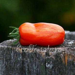 Сорт томата Перцевидный Полосатый