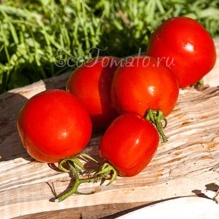 Сорт томата Пламя, Казахстан