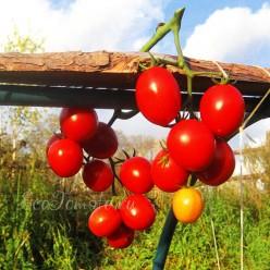 Пупсики Красные, Украина