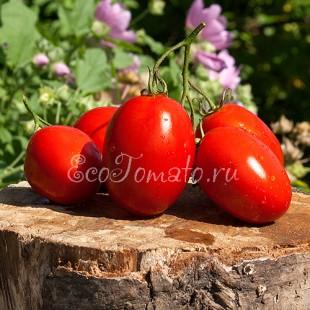 Сорт томата Rio Fuego (Рио Фуего), Италия