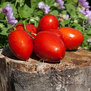 Сорт томата Rio Grande