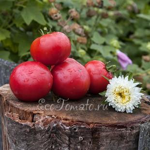 Сорт томата Rosalinda (Розалинда), США
