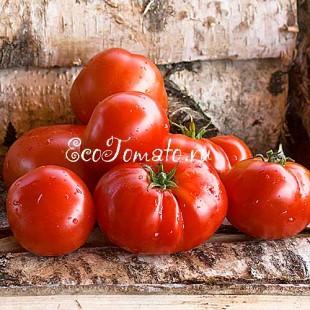 Сорт томата Сараевский №1 (Грунтовый №1)