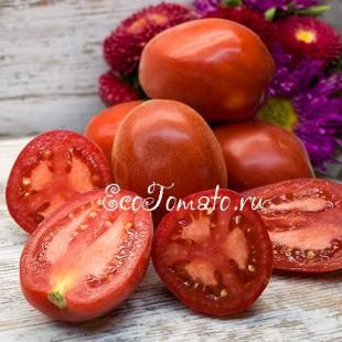Редкий опушенный сорт томата Шахеризада