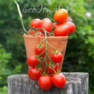 Сорт томата Тамито