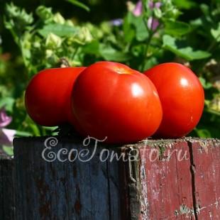 Сорт томата Взрыв