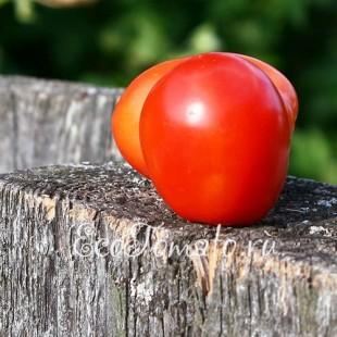 Сорт томата Ямпольска