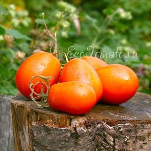 Сорт томата Янтарь, Казахстан