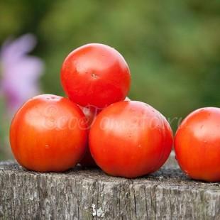 Бонни Бест, сорт томата из США