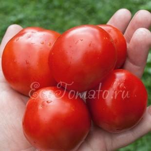 Ранний томат Эфемер
