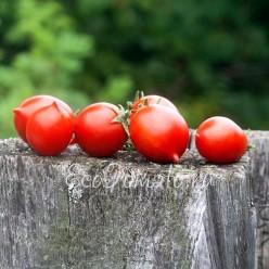 Pendulina red (Пендулина Ред, Швеция)