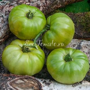 Сорт томата Dwarf Emerald Giant