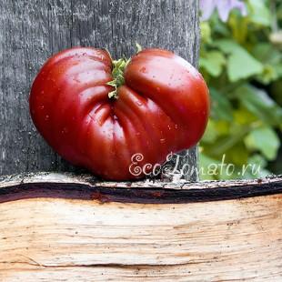 Сорт томата Dwarf Purple Heart (Гном Пурпурное Сердце)