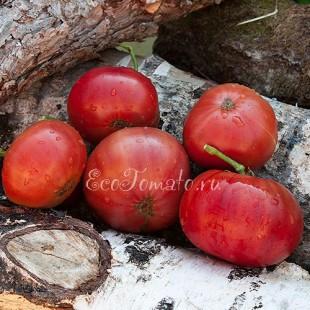 Сорт томата Dwarf Rosella Purple