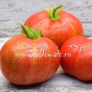 Сорт томата Striped Dwarf Typ A (Дварф Полосатый тип А)