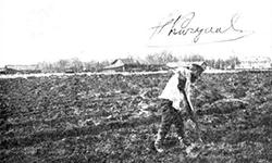 Северное огородничество, Штейнберг П.Н, скачать бесплатно>