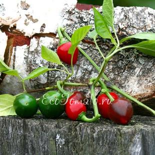 Перец острый Cherry red (Черри красный)