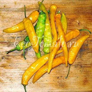 Перец острый Датч чили желтый (Dutch Chili yellow)