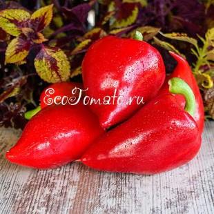 Перец сладкий Леся