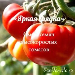 Яркая Грядка, смесь семян высокорослых томатов