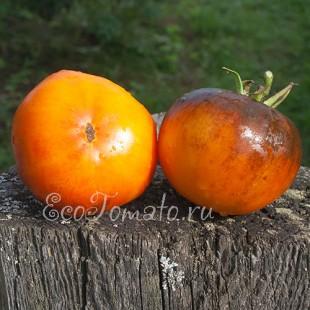 Сорт томата Afternoon delaght (Послеобеденный восторг), США