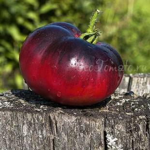Сорт томата Amethyst Jewel (Аметистовая драгоценность), США