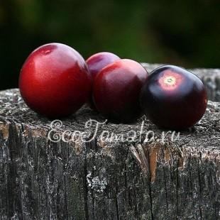 Сорт томата  Bing Cherry (Бинг Черри)