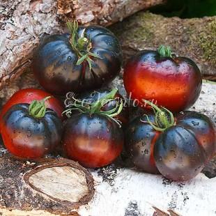 Сорт томата Black Beauty (Черная Красота), США